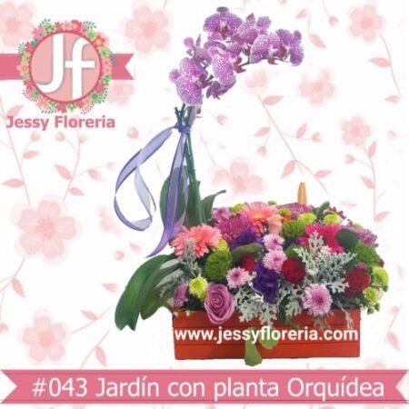 Jardín con planta de orquídea