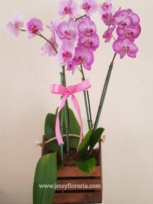 Plantas de orquídea