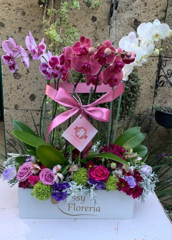 113-Caja 3 plantas de orquídeas