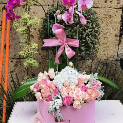 Caja 2 Plantas de orquídeas y rosas