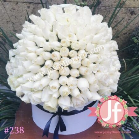 Caja blanca circular con 150 rosas blancas