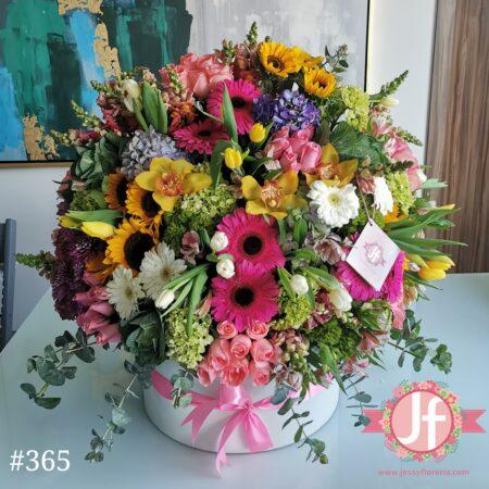 365-caja-circular-colorida