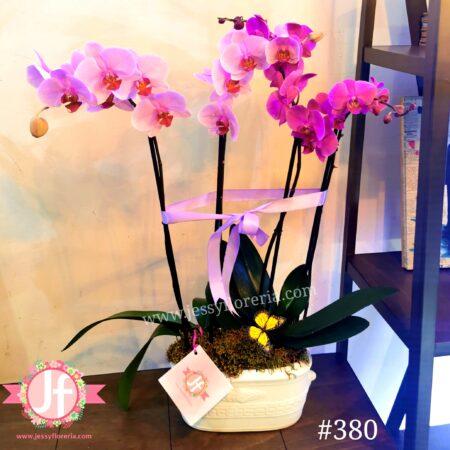 380-maceta-2-plantas-de-orquidea