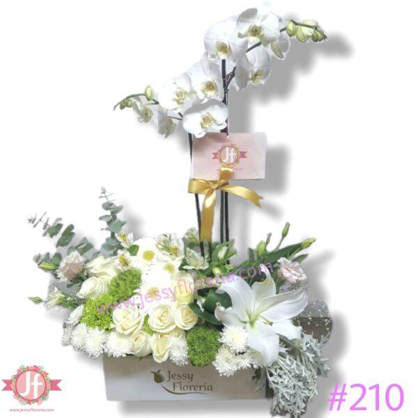 #210 Caja con planta de Orquídea