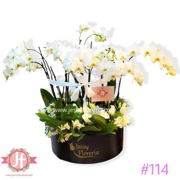 114 Caja 4 plantas de orquídeas